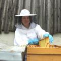SPD-Landtagsfraktion unterstützt Volksbegehren gegen Bienensterben
