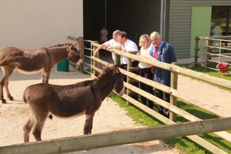 Esel und Abgeordnete
