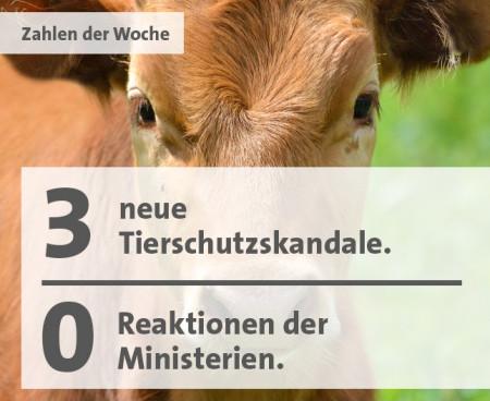 Tierschutzskandale Zahl der Woche