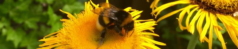 Forum Nachhaltigkeit Insekt
